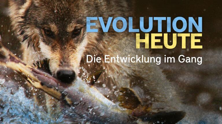Evolution heute